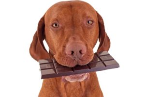 harmful foods for dogs and cats
