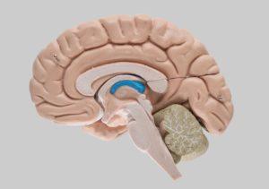 amazing brain facts