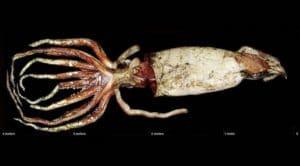 Scariest deep sea creatures
