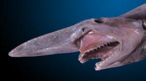 Scariest sea creatures
